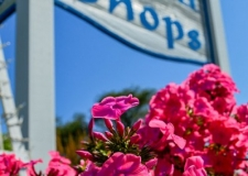 toth sign pink flowers